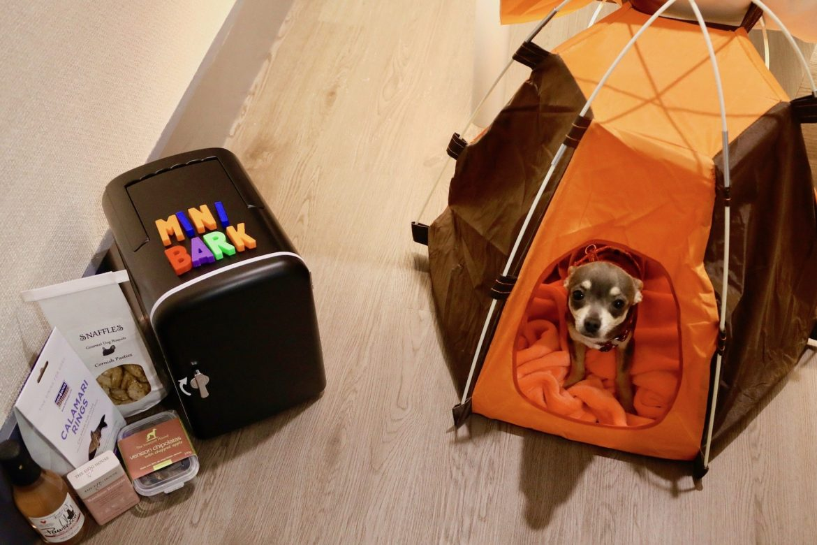 Dogs' high life with easyhotel
